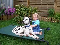 Dalmatiner mit Kind